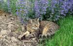 Мировые названия с приставкой «кошачий»