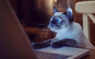 Кто умнее кошки или собаки — ответ на волнующий вопрос