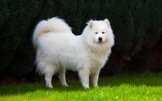 Цвета собак, которые приносят удачу в вашу жизнь по приметам