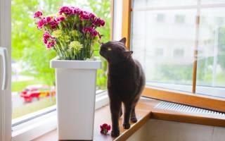 Почему кошки едят домашние растения