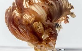 Восхитительные фотографии бойцовских аквариумных рыбок