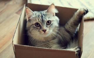 Зачем кошка залезает в коробку