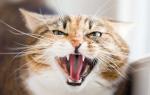Какие способы помогут успокить агрессивную кошку