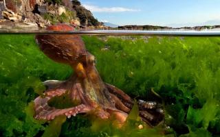 10 фактов об осьминогах