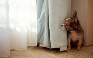 Мифы о маленьких собачках