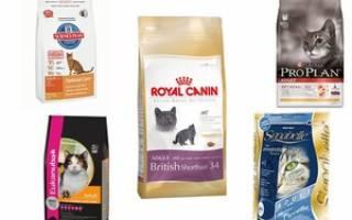 Рейтинг кормов для котят премиум класса: виды влажного и сухого кошачьего корма, описание холистика