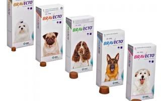 Бравекто для собак: инструкция по применению, капли и таблетки, аналоги