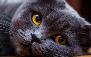 Чем промыть кошке глаза до приезда ветеринара