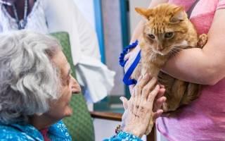 Лечение болезней анималотерапией