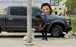 Люди спасли щенка, которого хотели усыпить