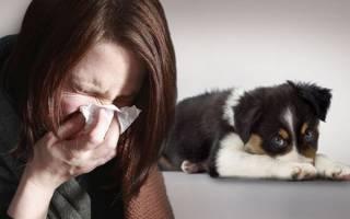 Каких собак можно завести аллергикам