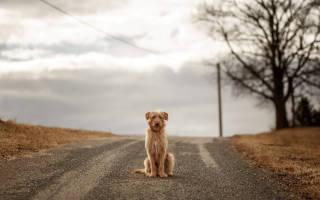 К чему собака перебегает дорогу