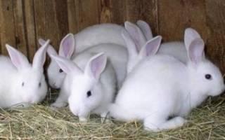 Кролиководство в домашних условиях: выбор и особенности содержания кроликов, строительство клетки, видео