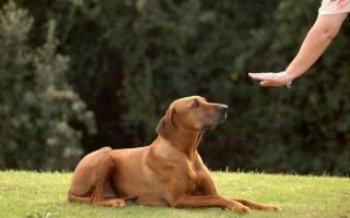 Как отучить собаку прыгать на людей: полезные рекомендации
