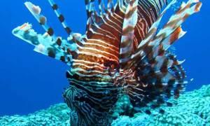 У берегов Бразилии на глубине 120 метров обнаружили необычную яркую рыбку