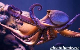 Как характеризуется осьминог: внешний вид и особенности строения спрута, сколько живут эти животные