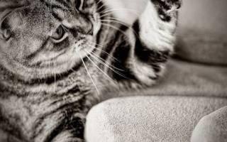 Как отучить кошку драть обои