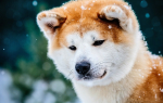 Интересные факты о собаках — подборка фото