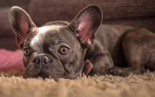 Какие породы собак наиболее популярны в России