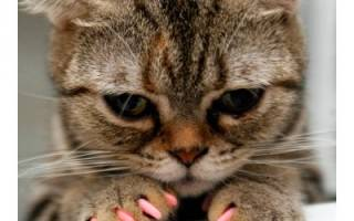 Что собой представляют антицарапки для кошек: преимущества мягких накладок, инструкция, отзывы владельцев