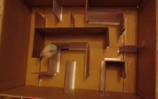 Как сделать лабиринт для хомяка своими руками: из картона, фанеры, пластиковых бутылок, другие идеи