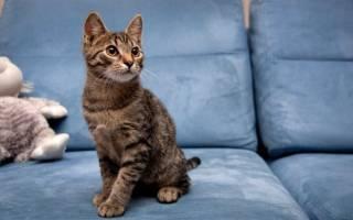 Диван с какой обивкой лучше выбрать, если у вас есть кот