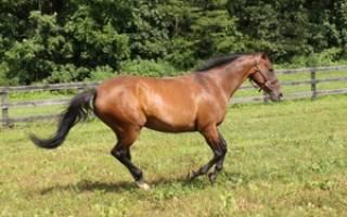Какие бывают клички коней, примерный список в интернете для жеребцов и кобыл