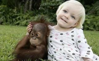 Каким именем можно назвать обезьянку мальчика: использование перевода, телевидения или качеств самого питомца