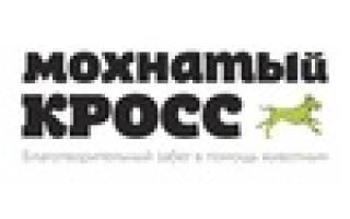 В Томске прошёл забег в помощь бездомным животным