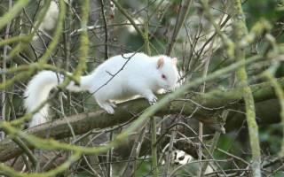 Жителю Англии удалось сфотографировать белку‐альбиноса