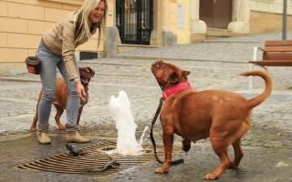 Учёные выяснили как собаки понимают человеческую речь