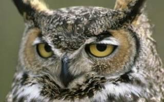 В Казани во время вечерней прогулки по парку сняли ночную охоту совы