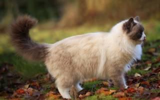 О чем говорит движение хвоста кошки
