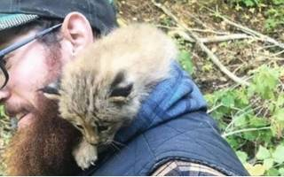 Канадец нашёл в лесу маленького котёнка, точнее он так думал