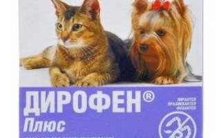 Как определить наличие глистов у кота: основные симптомы, профилактика и лечение