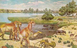 Млекопитающие адаптировались к свету после вымирания динозавров