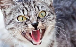 Почему нельзя смотреть в глаза кошке — ответ на волнующий вопрос