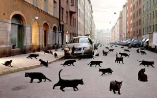Чёрный котёнок из приюта неожиданно стал менять цвет
