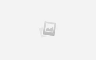 Породы собак — долгожители