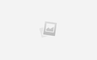 Кроме породистых: москвичи смогут бесплатно стерилизовать животных
